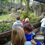 Cincinnati Zoo Photos